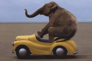 Yellow-car-with-elephant-driver